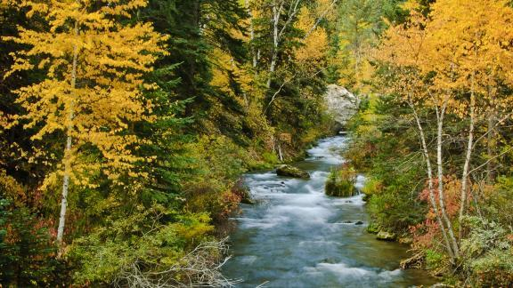 Spearfish Canyon creek