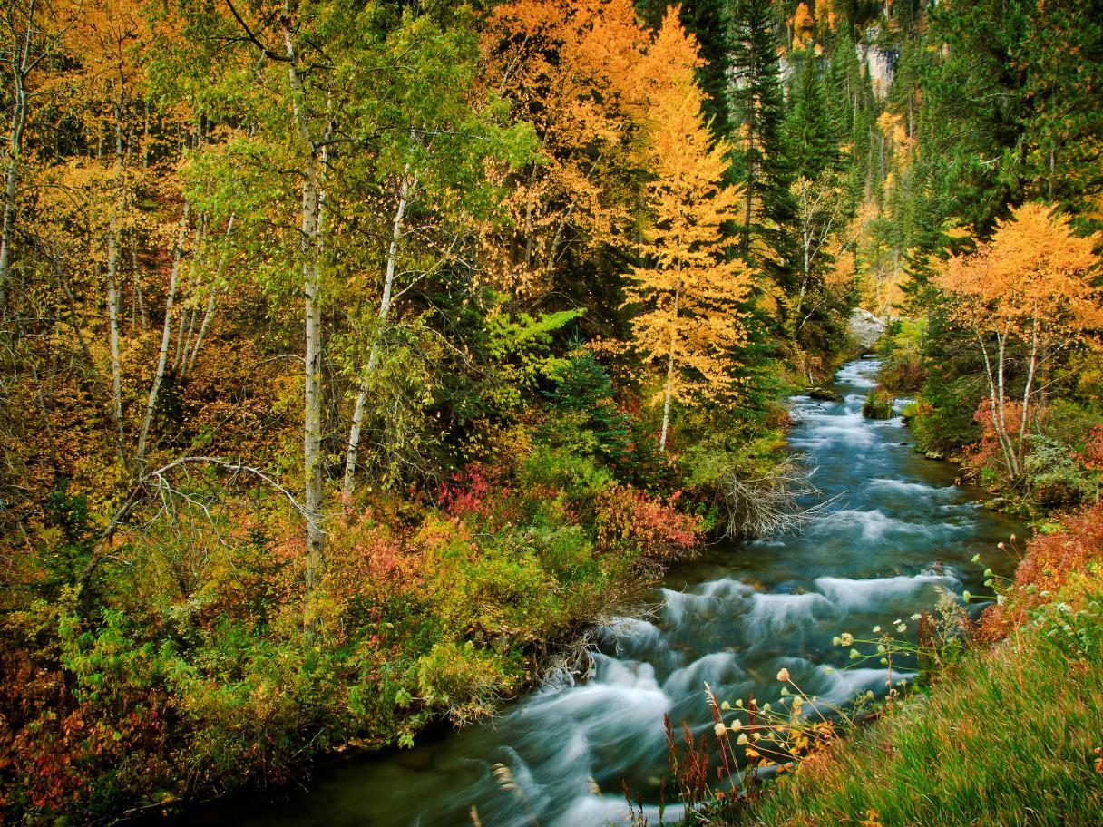 Fall foliage in Spearfish Canyon