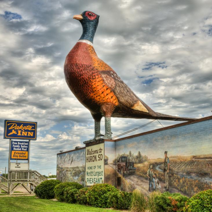 World's Largest Pheasant