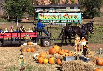 Lil Harvester's Pumpkin Patch, Rapid City