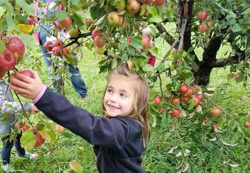 Country Apple Orchard, Harrisburg