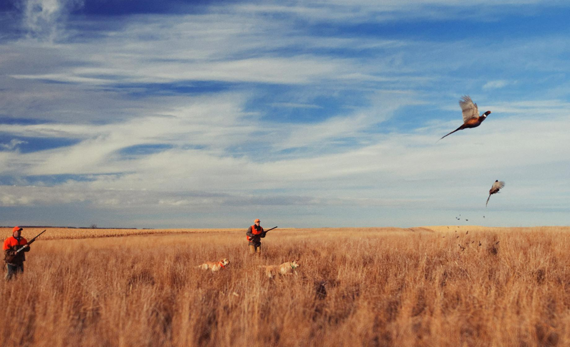 Pheasant hunting, South Dakota