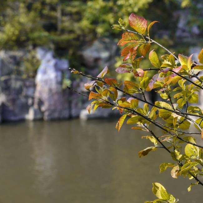 Fall leaves in Palisades State Park
