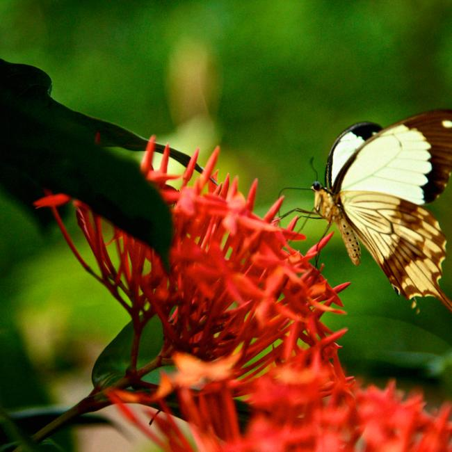 Sertoma Butterfly House & Marine Cove