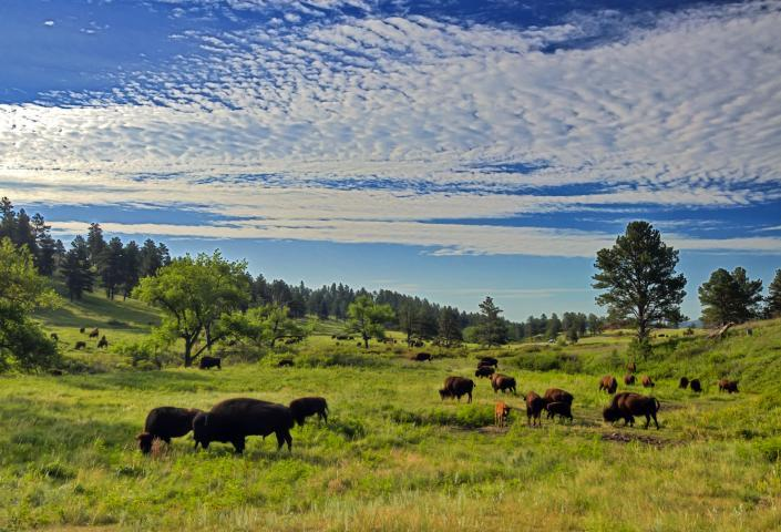 7 Unexpected Things You'll See in the Black Hills National