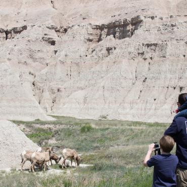 Wildlife in the Badlands
