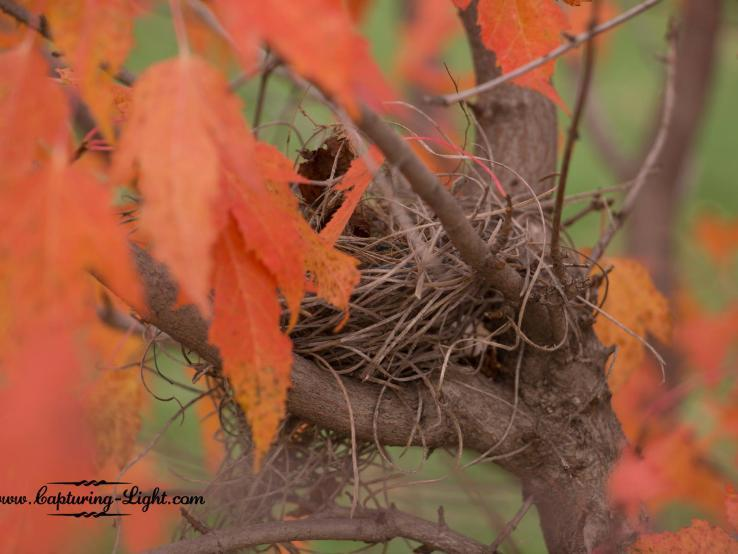 Fall Bird Nest