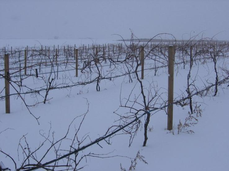 Vines at rest