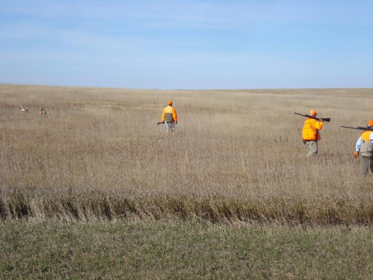 Pheasants in the CRP