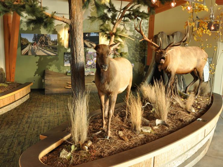 Elk display