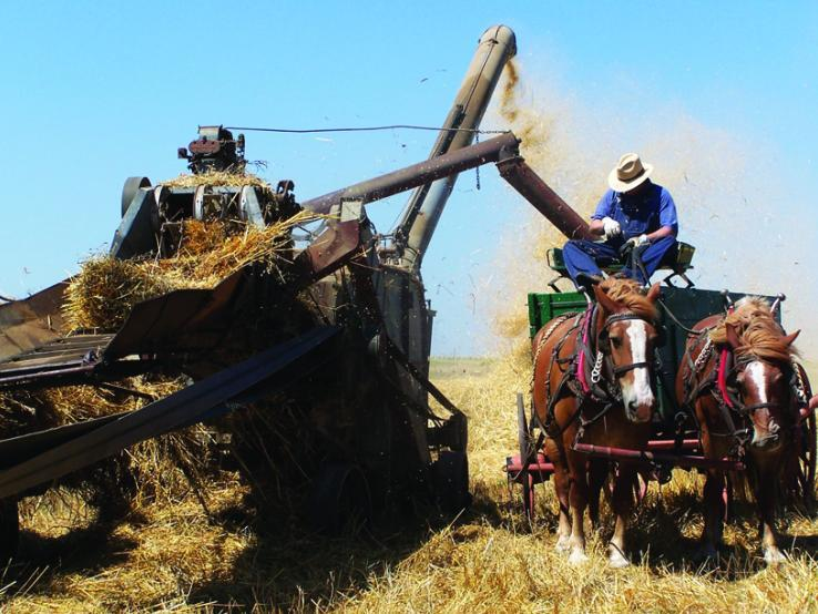Threshing Festival - Delmont