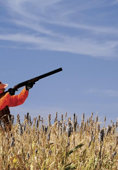 Hunters aim their rifles looking for birds.