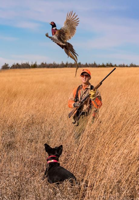 South Dakota Pheasant Hunting Dog Flushing Rooster