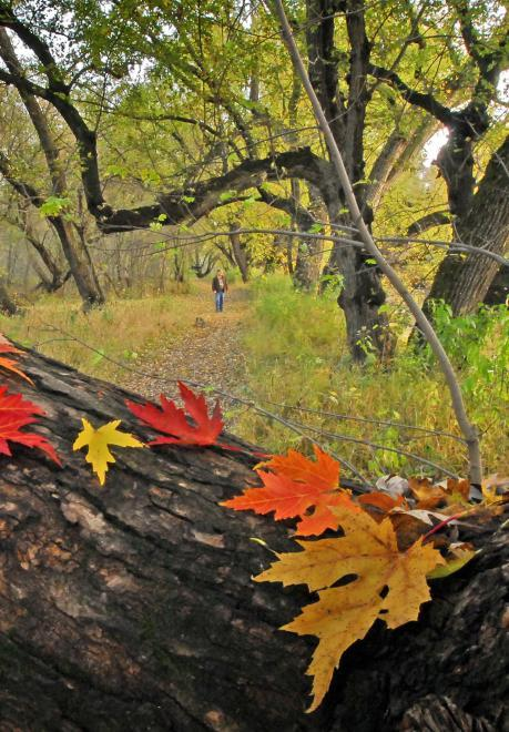 Fall leaves, Big Sioux State Recreation Area