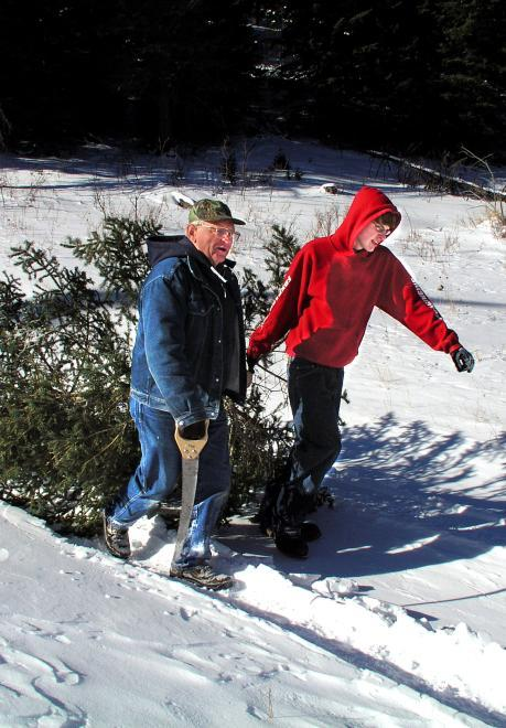 Black Hills Christmas Tree Permit Season